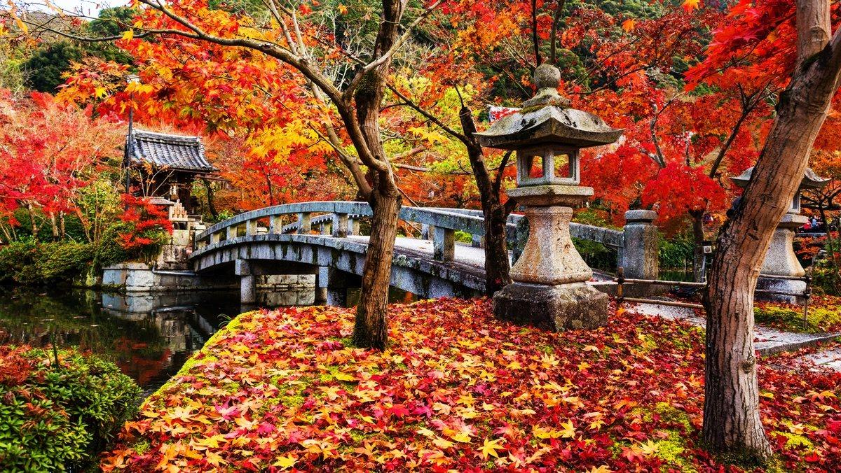 Los colores de otoño o 'koyo' deslumbran en Japón