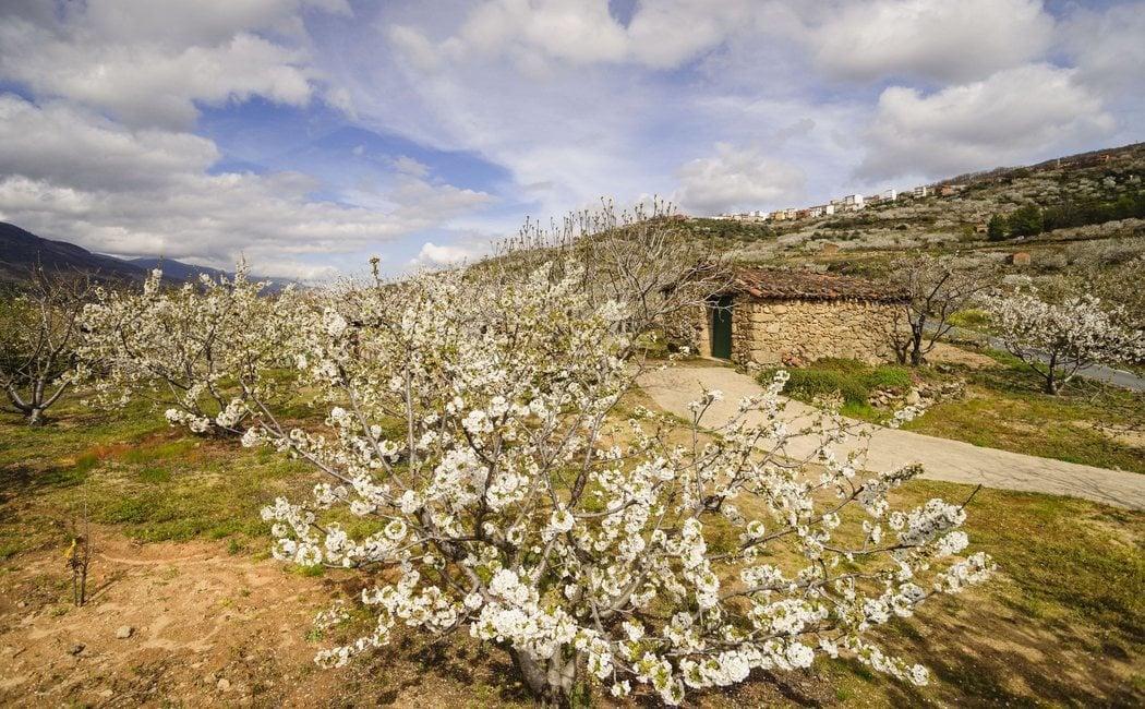 ¿Cuándo es la mejor época para visitar el valle del Jerte?