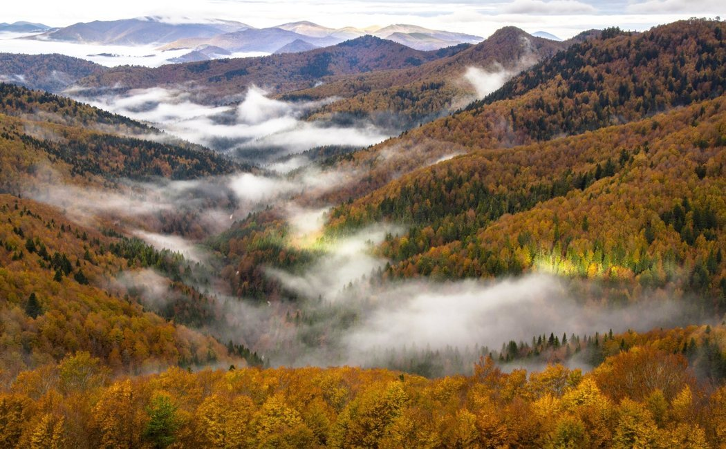 Qué ver en la Selva de Irati, la grandiosidad del Pirineo navarro