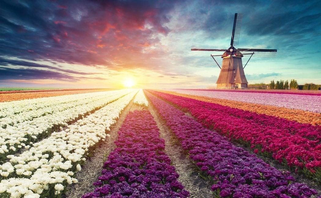 Qué ver y cómo ir a los Molinos de Kinderdijk en Holanda