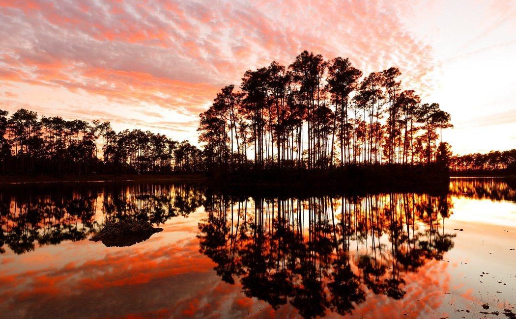 Qué ver y qué hacer en Los Everglades