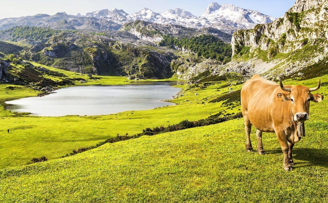 Una ruta por los Lagos de Covadonga, el paisaje más bonito de Asturias