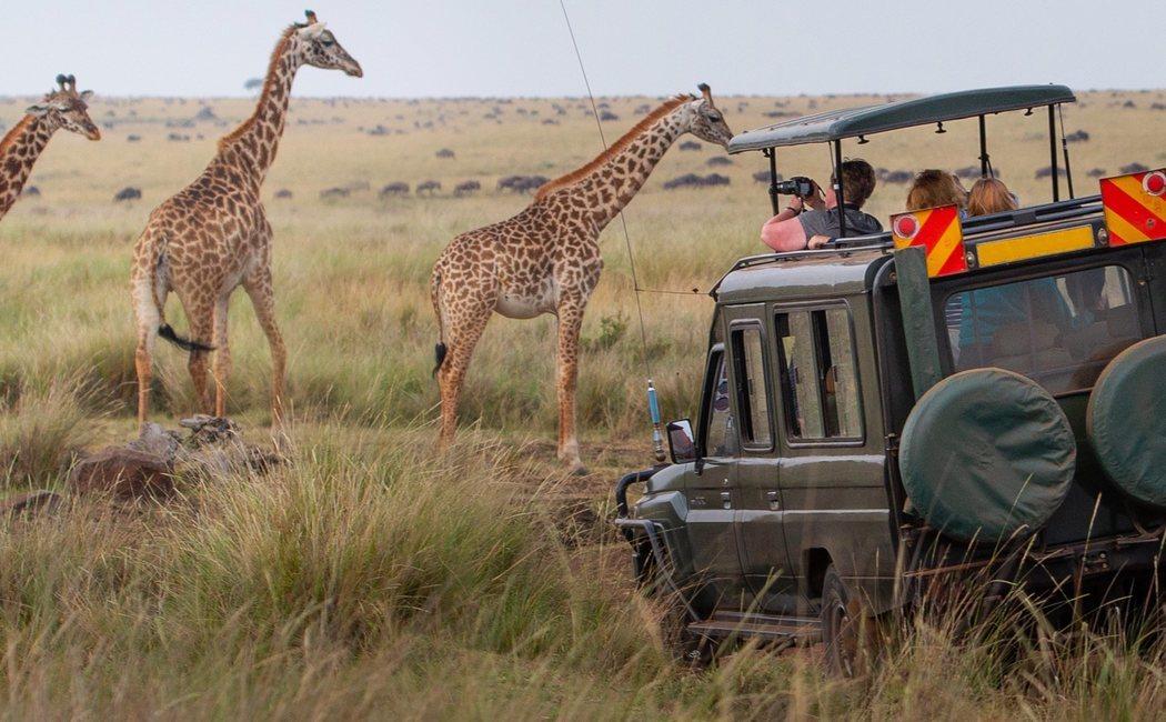 Cómo organizar un Safari