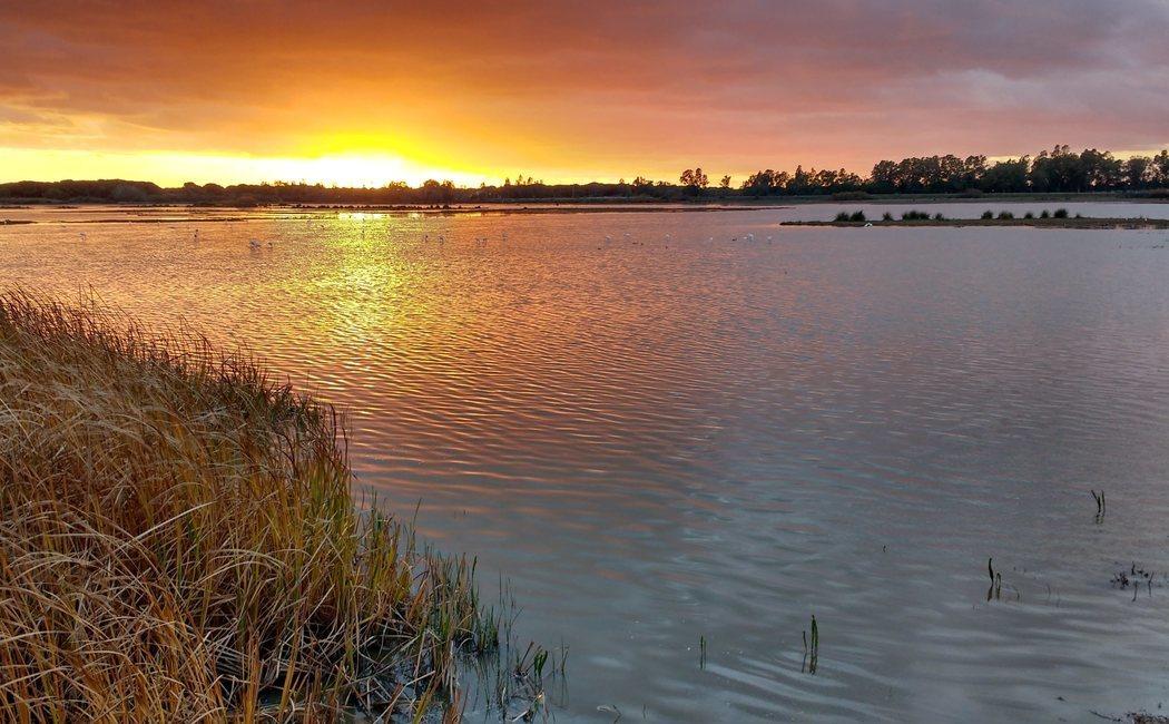 Qué ver en Doñana: guía para visitar el Parque Nacional repartido entre Huelva, Sevilla y Cádiz
