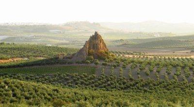 Descubre la Campiña Sur cordobesa: paisaje, historia y vino en el corazón de Andalucía