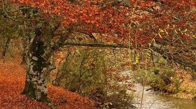 Dónde ver el otoño en Madrid: 4 parajes naturales donde disfrutar de esta estación