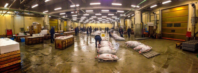 La subasta del atún en Tsukiji es un destino turístico muy popular, limitado a 120 personas cada día.